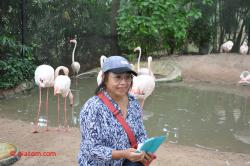 Between flamingos.